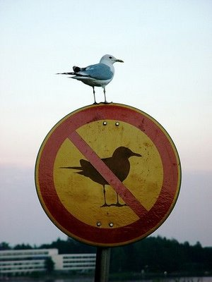 Bird_breakingrules