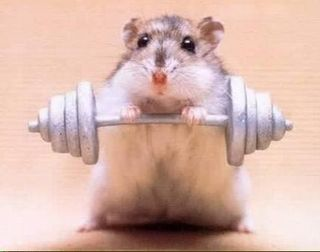 Weight_Lifting_Hamster