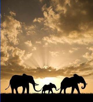 Following_elephants