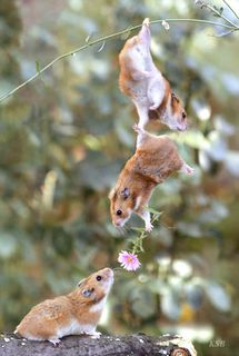 Teamwork-mice
