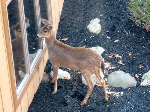 Deer_GuestRoom