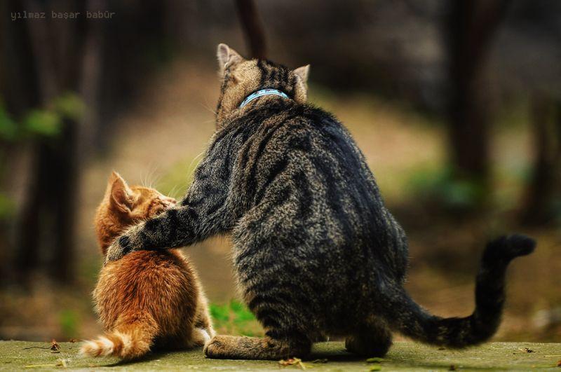Advice_cats
