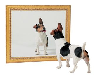 Self Awareness Dog Mirror