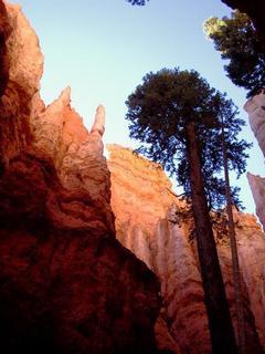 Treegrowingtall0