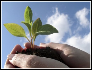 Develop Others Flower Bud